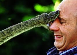 snake bite head