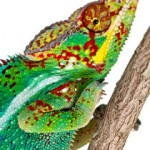 Be a Leader — Be a Chameleon