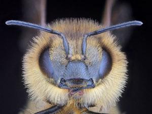 Creative Leadership: Make like a honeybee to secure success