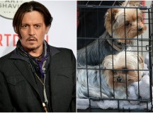 Australia threatens to kill Johnny Depp's dogs