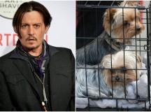 Australia threatens to kill Johnny Depp's dogs