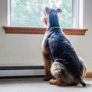What Is The Monthly/Annual Cost Of Pet Ownership