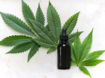 CBD Oil Bottle and a small plant of Cannabis